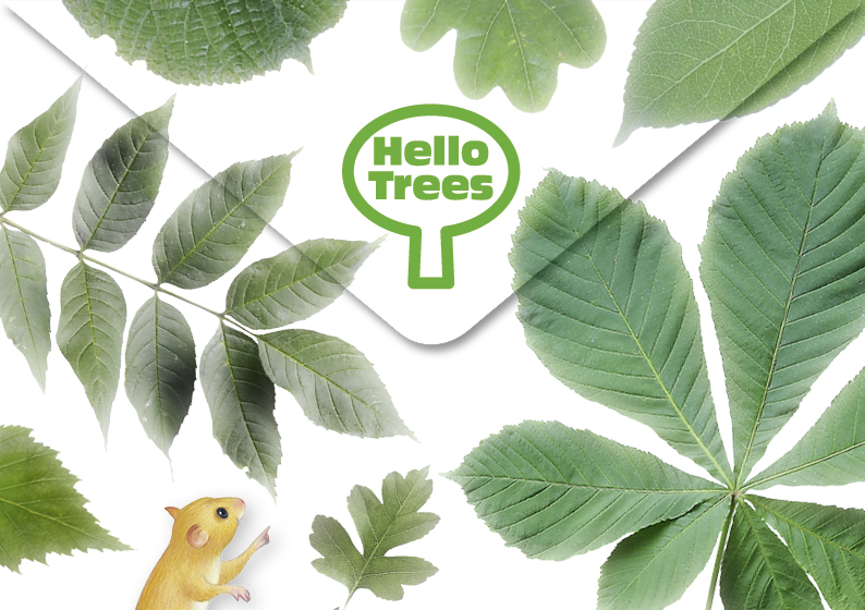 Hello Trees box